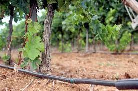 irrigation par les eaux usées